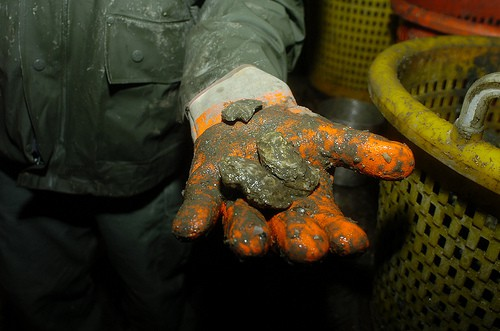 Oyster poaching on the Chesapeake Bay