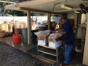 Packing boxes of crabs behind Mr. B's seafood market