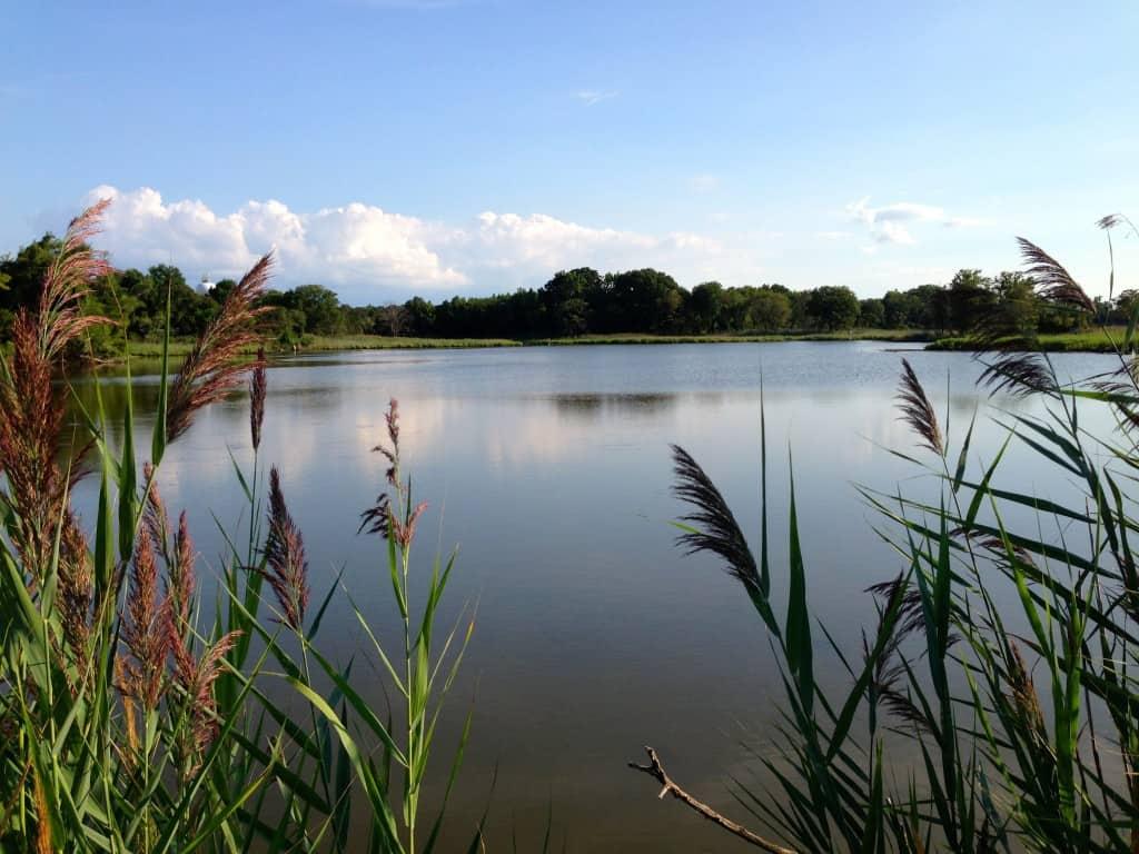 Terrapin Park tidal marsh on Kent Island
