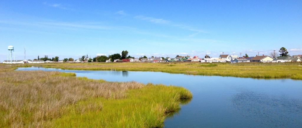 Tangier Island marshes