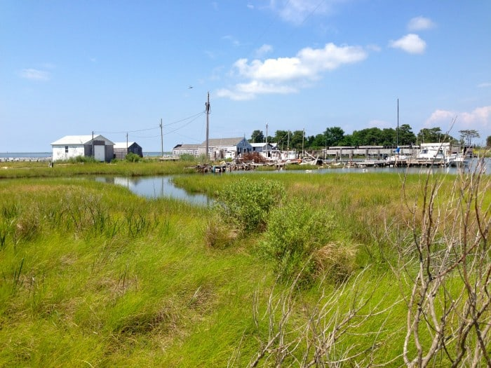 Marshes of Smith Island
