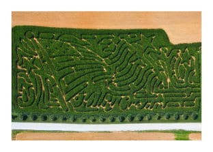 "MD Farm on ""Amazing"" Corn Maze List"