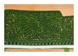 Kilby Cream corn maze