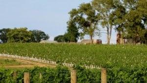 Chateau Bu-Te winery