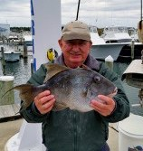 Maryland gray triggerfish