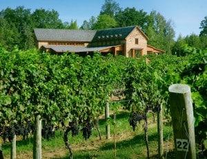 New Kent Winery & Vineyard