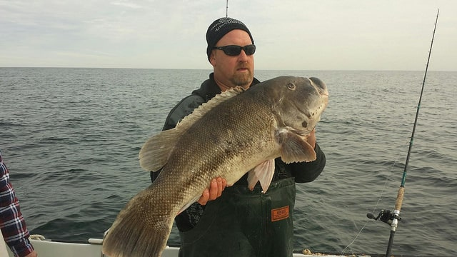Record tautog caught off Ocean City