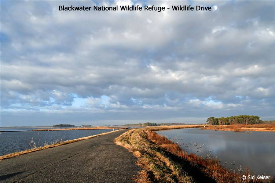 Friends of Blackwater NWR