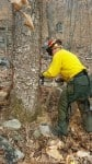 Maryland Forest Service cuts trees on Appalachian Trail