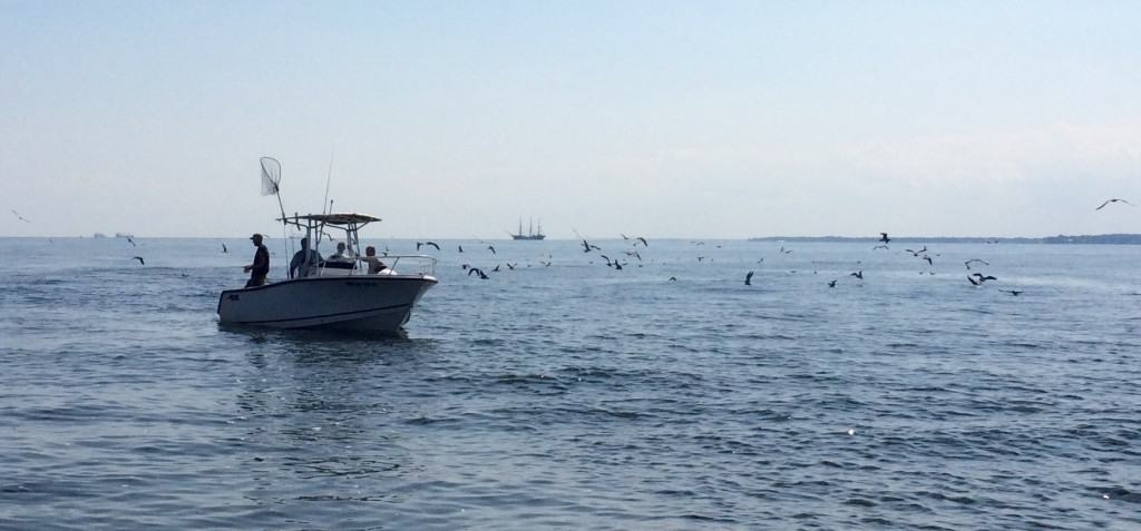 Fish feeding frenzy on the Chesapeake Bay