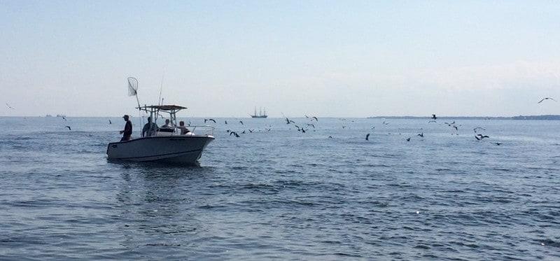 Fish feeding frenzy on the Chesapeake Bay