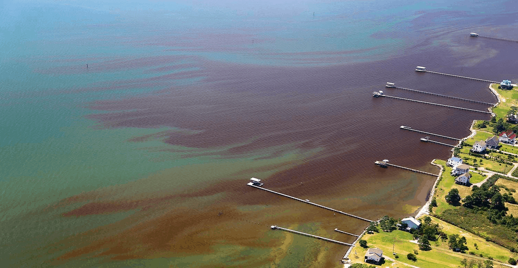 Algae Bloom on north shore of the York River mouth