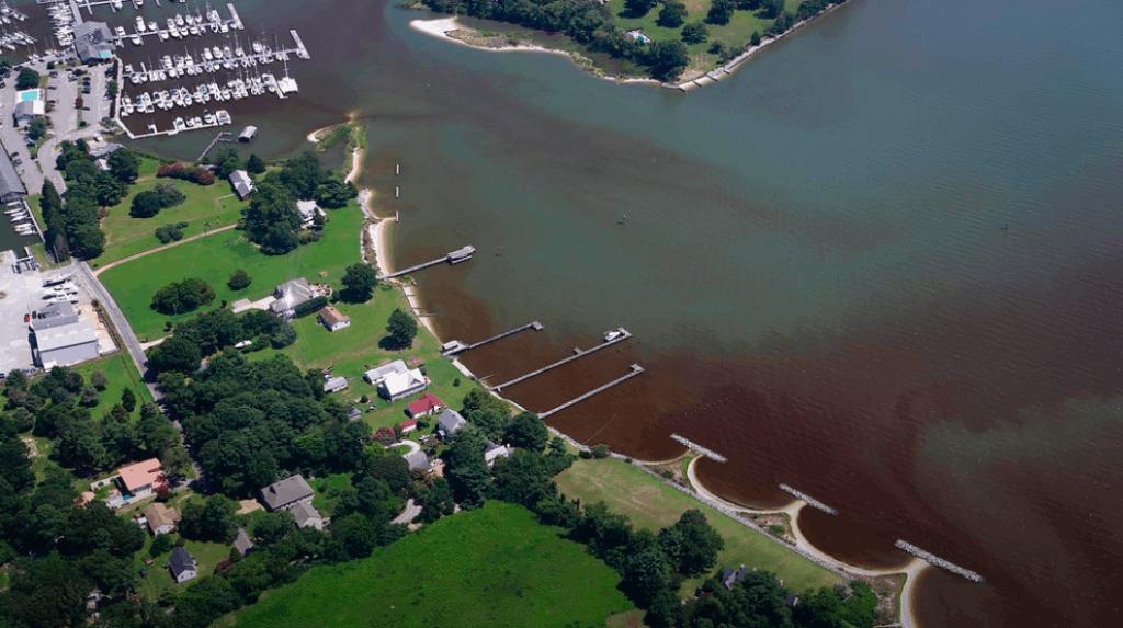 Algae bloom at Sarah's Creek in Chesapeake Bay