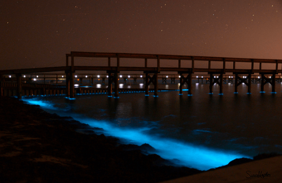 Algae blooms at night in the lower Chesapeake Bay (photo courtesy VIMS)