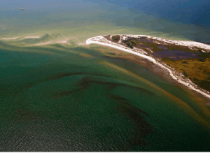 lower Chesapeake Bay algae blooms