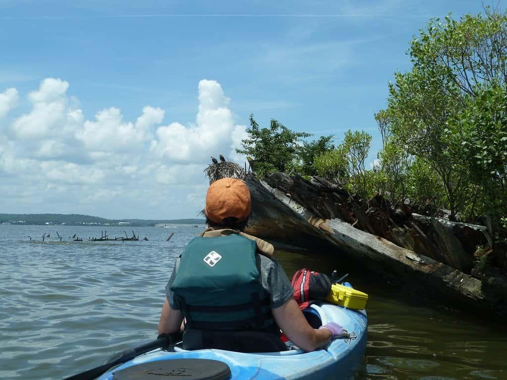 Kayaker at Mallow's Bay