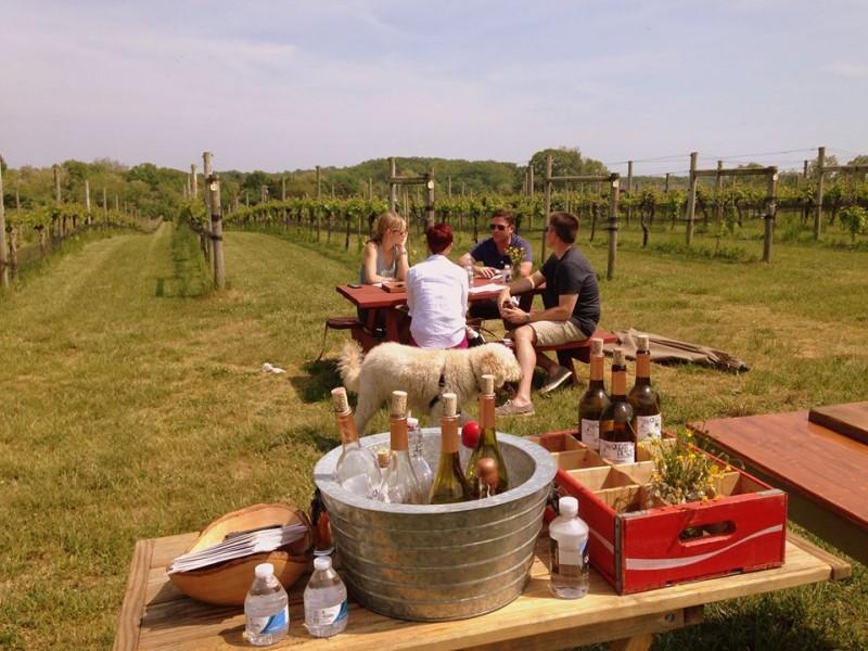 "Maryland & Virginia Wineries May Be the Next ""Big Thing"""