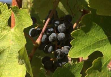 Beyond Cabernet: 10 Cool Things to Know About 'Other' Wines