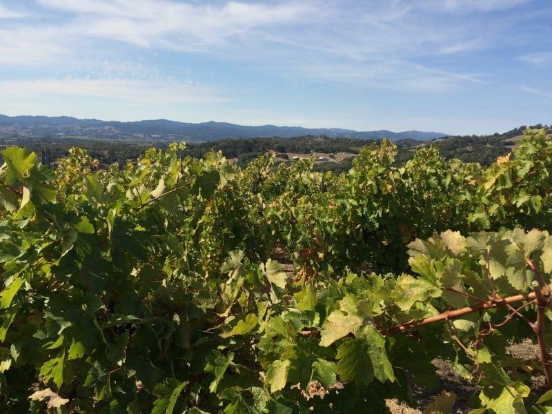 Calluna winery