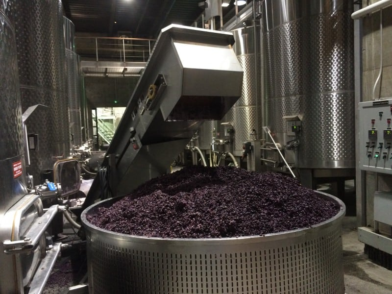 Grapes have been sorted and are put into this bin where they will slowly condense into juice