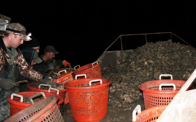 Maryland DNR Policy measuring oysters on the skipjack of a suspected poacher
