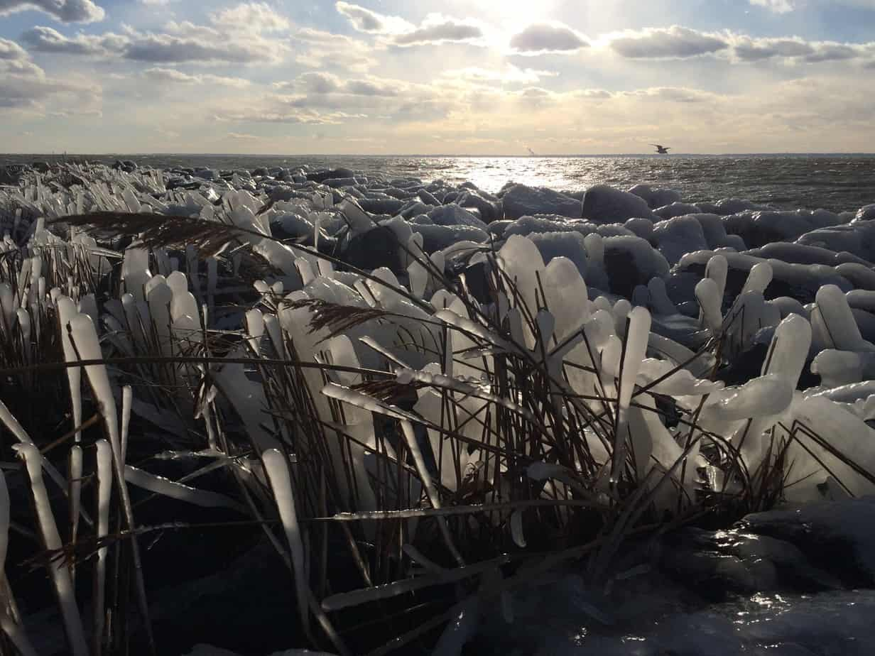 The wind created frozen ice sculptures among the marsh grass and rocks on the Tilghman Island shore