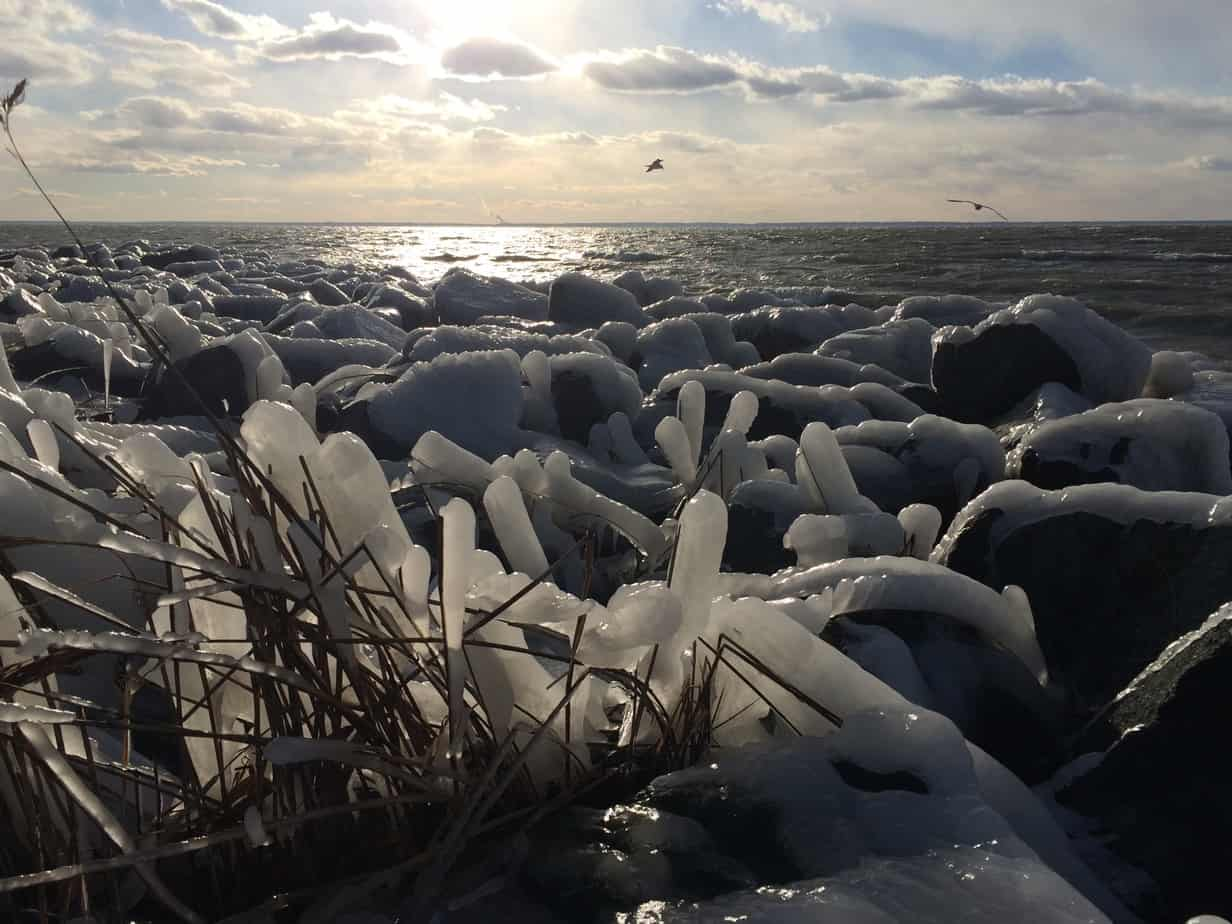 Beyond the ice-covered reeds and rocks, seagulls were riding the wind currents.