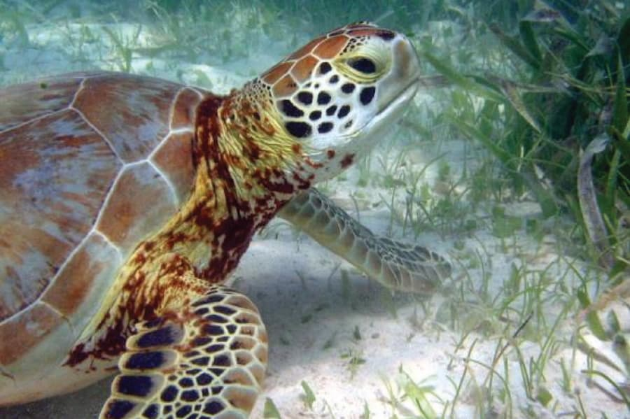 One one of animals that live off underwater grasses