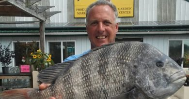 Record Chesapeake Bay sheepshead fish
