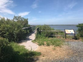 Eastern Neck Wildlife Refuge