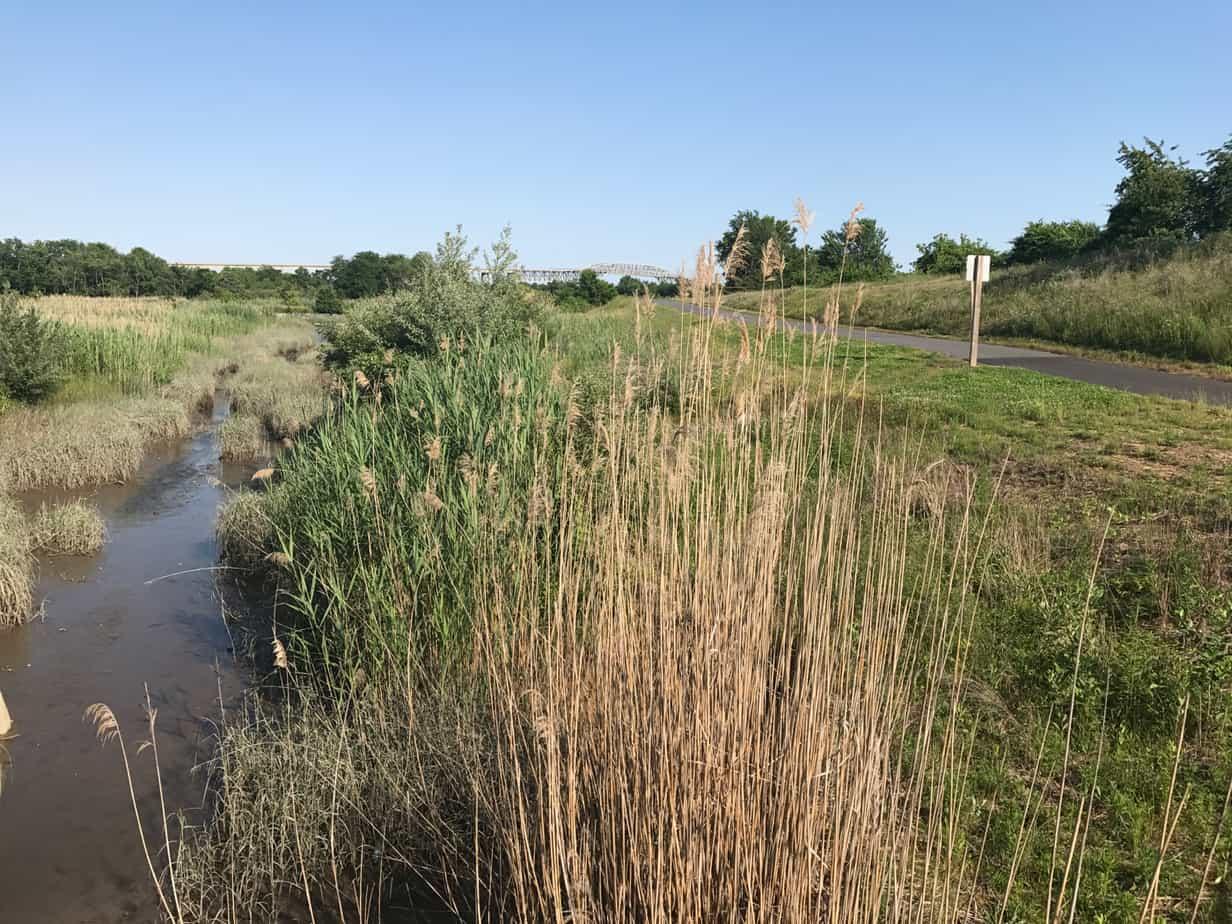 Tidal Marsh outside Delaware City