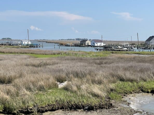 Smith Island shanties in the marshes