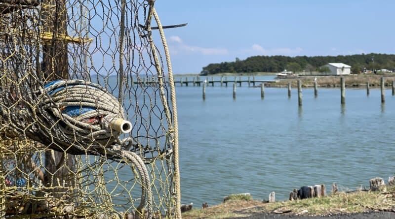 Hooper Island crab trap at pier